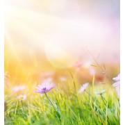 Frühlingsmode | Festtagskinder.de
